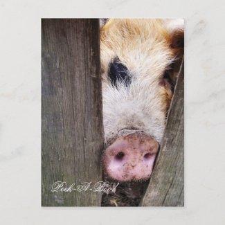 FARM ANIMALS UK postcard