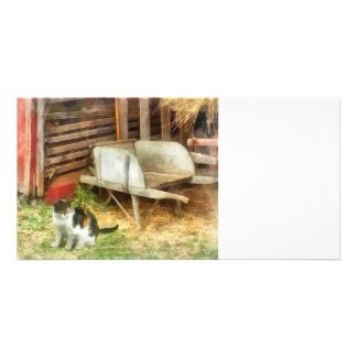 Farm Cat Photo Cards