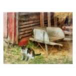Farm Cat Poster