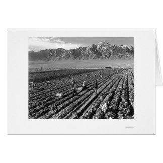Farm, Farm Workers, Mt. Williamson 1943 Card