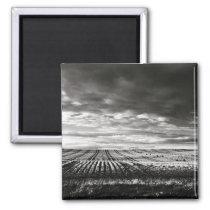 farm field rows magnet