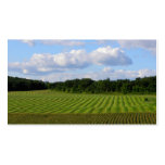 Farm field striped land farmer harvesting photo Double-Sided standard business cards (Pack of 100)