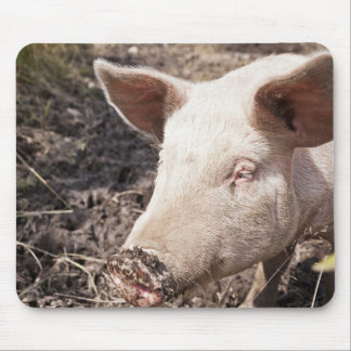 Farm field with pig mouse pad