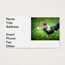 Farm Fowl Business Card