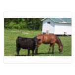 Farm Friends 2 Post Cards