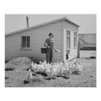 Farm Girl Feeding Chickens, 1936. Vintage Photo Poster