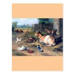 Farm Goat Kids Pigeons Postcard