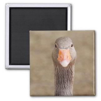 Farm Goose Fridge Magnet