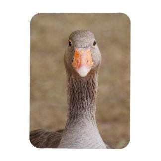 Farm Goose Magnets