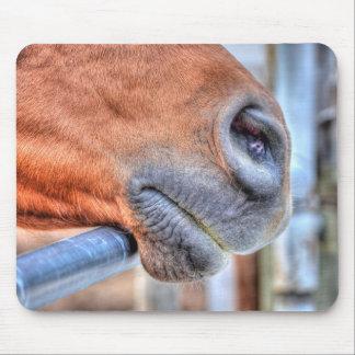 Farm Horse Muzzle Equine Photography Mouse Pad