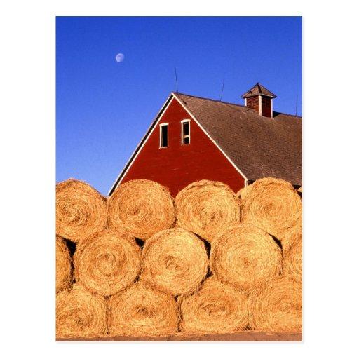 Farm in Iowa Postcard
