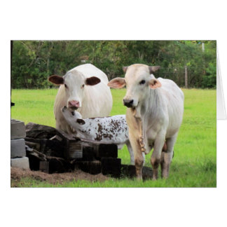 Farm Life (7329) - Cows Card