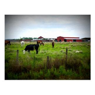 Farm Life Post Card