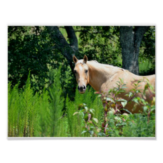 Farm Scenery Palomino Horse in Pasture Poster