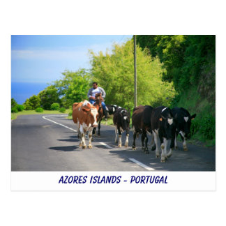 Farmer and cows postcard