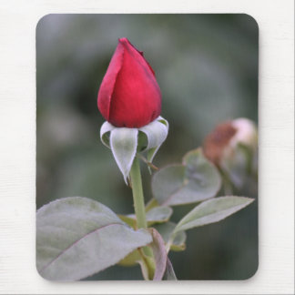 Farmers Branch Rose Gardens: Newly Bloomed Red Bud Mouse Pad