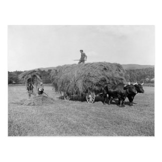 Farmers Cutting Hay, 1906 Postcard