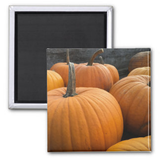Farmer's Market, Autumn Harvest Pumpkins Magnet
