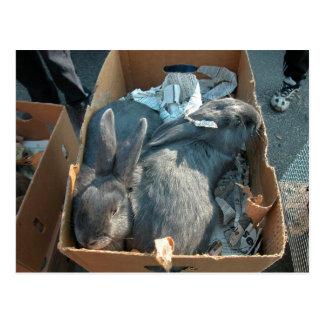 Farmer's market, Louans, Bresse, grey rabbits Post Card