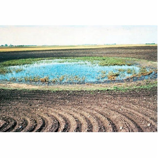 Farming Affecting Wetlands Photo Cut Outs