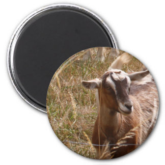 Farming goats 2 inch round magnet