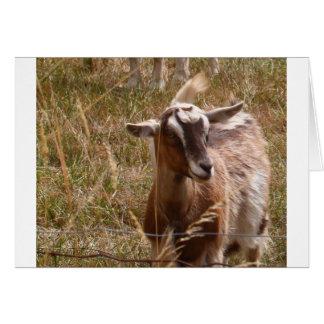 Farming goats card