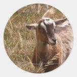 Farming goats classic round sticker