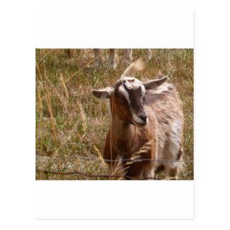 Farming goats postcard