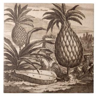 Farming Large Pineapples, illustration from a desc Tile