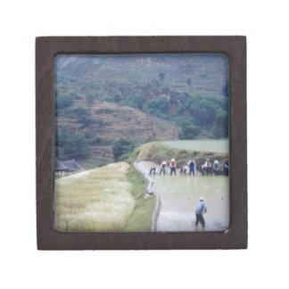 farming plain scenery  rice field planation jewelry box