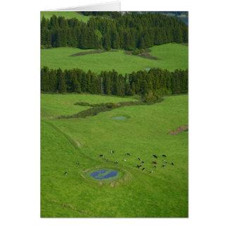Farmland in Azores islands Card