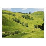 Farmland near Gisborne, New Zealand Card