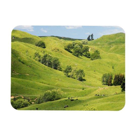 Farmland near Gisborne, New Zealand Magnet