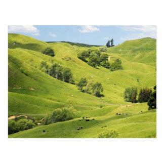 Farmland near Gisborne, New Zealand Postcard