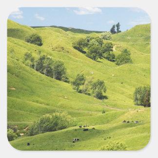 Farmland near Gisborne, New Zealand Square Sticker