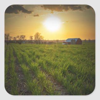 Farmland Sunset Square Sticker