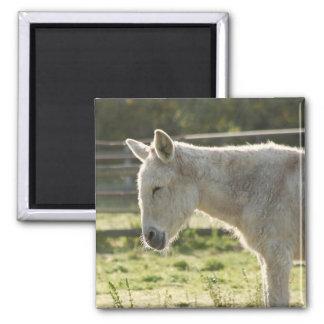 Farmyard Donkey 2 Inch Square Magnet
