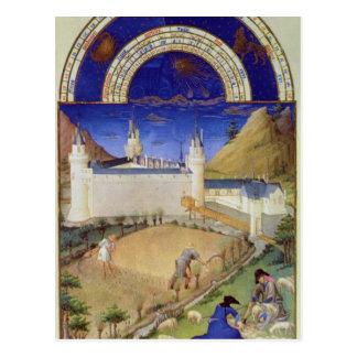 Fascimile of July: Harvesting and Sheep Postcard
