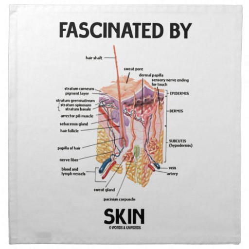Fascinado por la piel (capas de la piel)