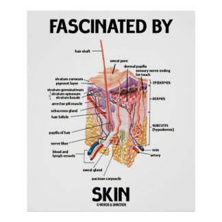 Fascinated By Skin (Skin Layers) Poster