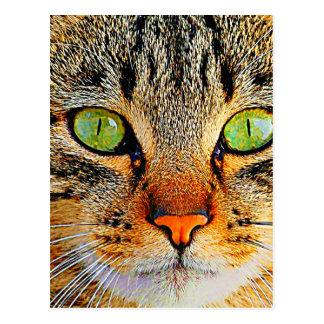 Fascinating Green Eyed Cat Postcard