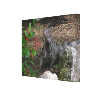 fascinating iguana with raised head stretched canvas prints