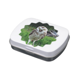 fascinating Owl Jelly Belly Candy Tin
