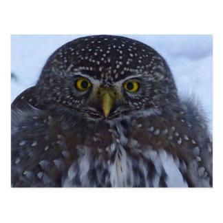 fascinating owl postcard