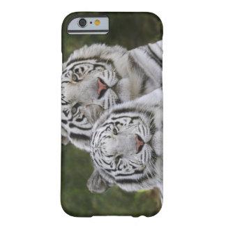 Fase blanca, tigre de Bengala, el Tigris Funda De iPhone 6 Barely There