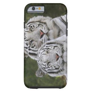 Fase blanca, tigre de Bengala, el Tigris Funda De iPhone 6 Tough