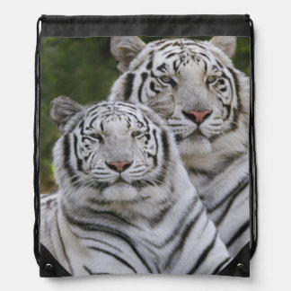 Fase blanca, tigre de Bengala, el Tigris Mochilas