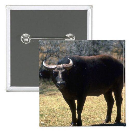 Fase Búfalo-negra del bosque enano Pin Cuadrada 5 Cm
