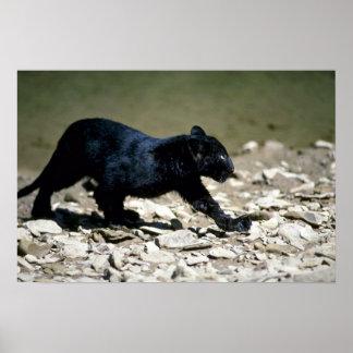 fase-cachorro Leopardo-negro (moje del río) Póster