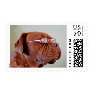 Fashion Dogue de Bordeaux Postage